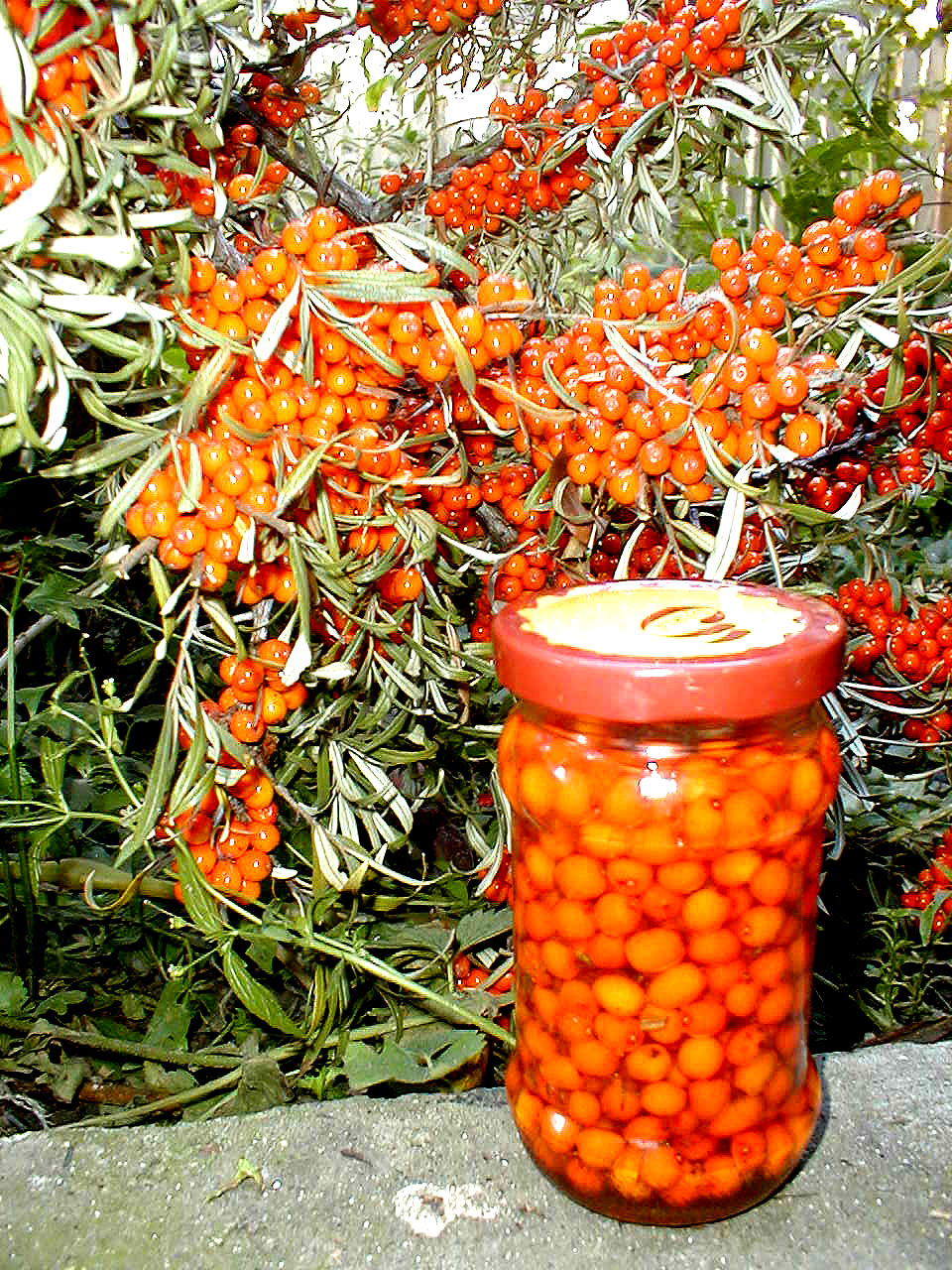 Recipes sea buckthorn oil. Useful properties and application 30