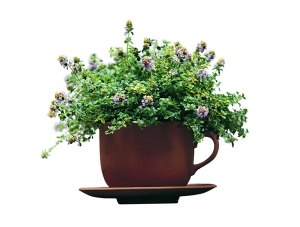 Thyme Tea Relieves Cough and Fever